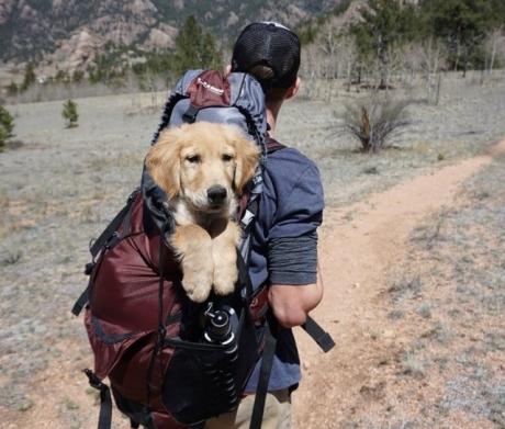 adult-adventure-backpack-1448055-spencer-gurley.jpg