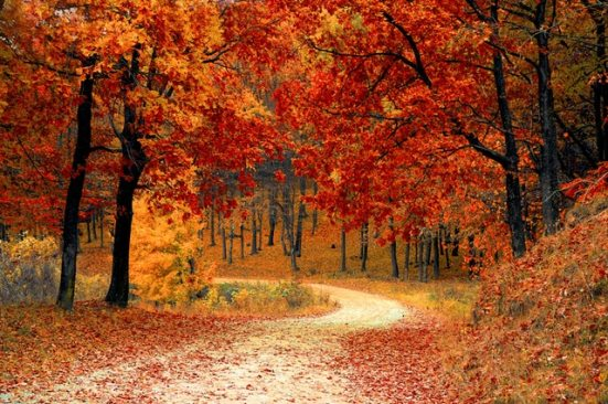 colorful-colourful-forest-33109