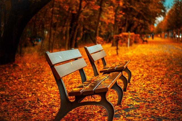 bench-blur-daylight-40884